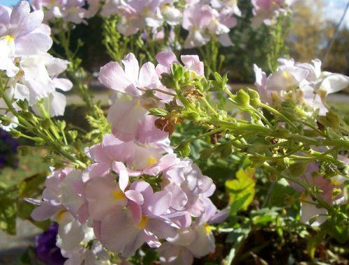 Ogród botaniczny - pomysł na randkę?