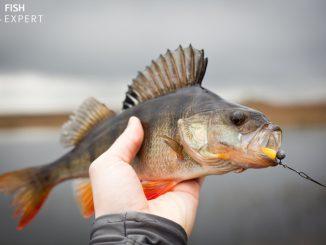 Znajomość budowy i fizjonomii ryb, a zwiększenie skuteczności połowów