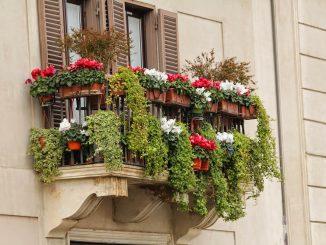 Uprawa roślin na balkonie, a może własna szklarnia?