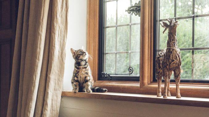 Kot w domu – jak zabawki sprawią mu radość?